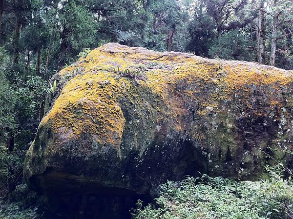 0804金龜岩及猴洞步道 (33)