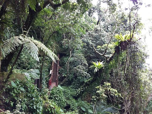 0804金龜岩及猴洞步道 (43)