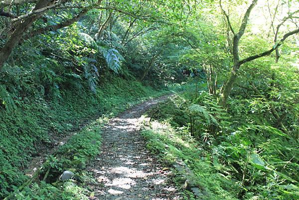 0902東勢格越嶺步道 (8)