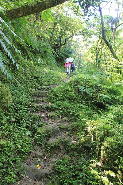 0902東勢格越嶺步道 (21)