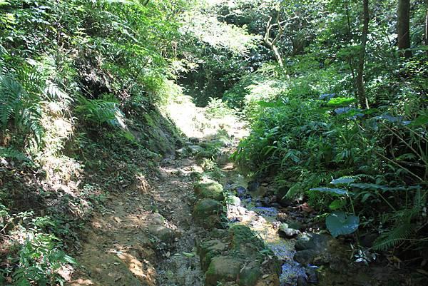 0902東勢格越嶺步道 (65)