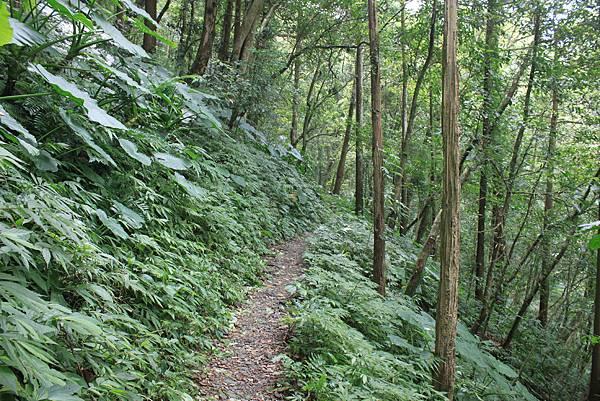 0923三峽雲森瀑布 (26)