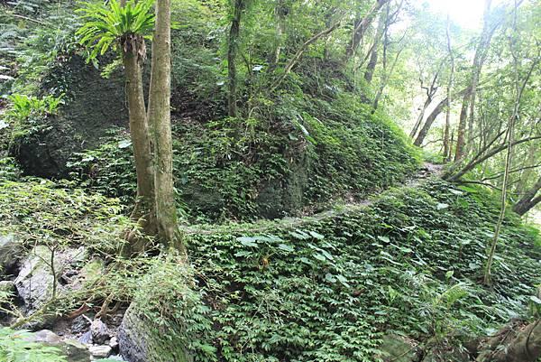 0923三峽雲森瀑布 (27)