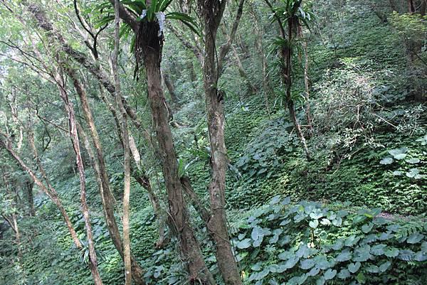 0923三峽雲森瀑布 (29)