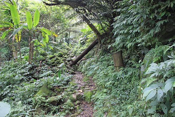 0930小粗坑古道上石門山頂 (8)