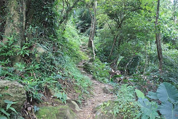 0930小粗坑古道上石門山頂 (16)