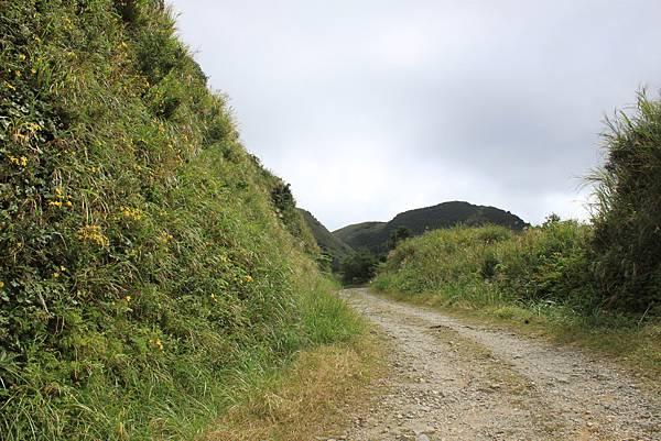 1013往半平山的無耳茶壺登山步道 (4)