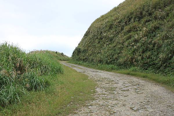 1013往半平山的無耳茶壺登山步道 (8)