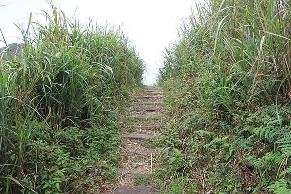 1013往半平山的無耳茶壺登山步道 (11)