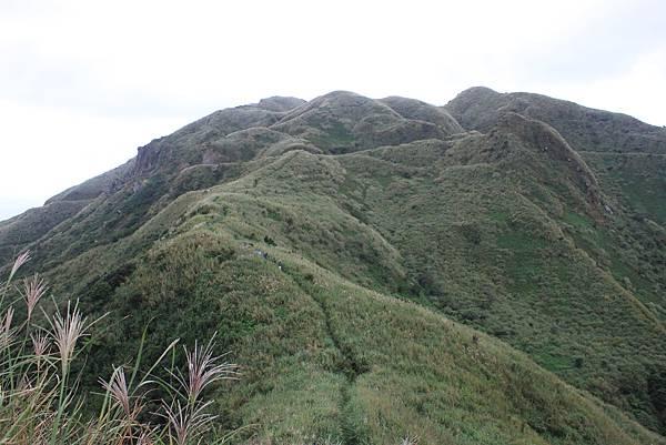 1013往半平山的無耳茶壺登山步道 (15)