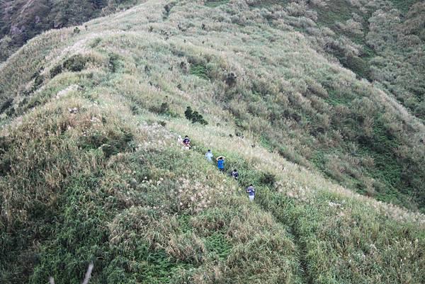1013往半平山的無耳茶壺登山步道 (16)
