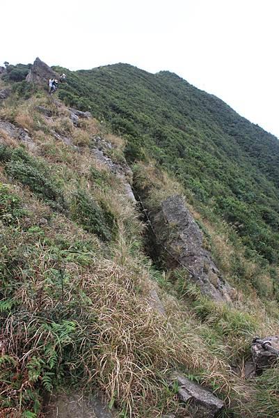 1013往半平山的無耳茶壺登山步道 (22)