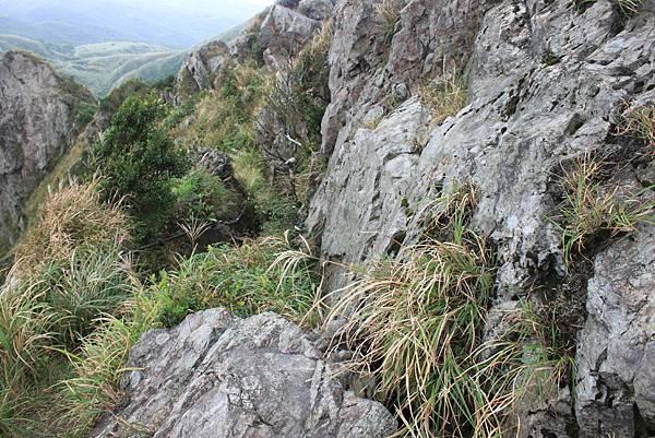 1013往半平山的無耳茶壺登山步道 (52)