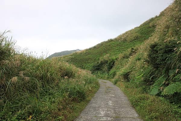 1013往半平山的無耳茶壺登山步道 (61)