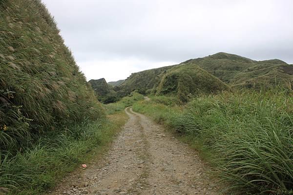 1013往半平山的無耳茶壺登山步道 (62)