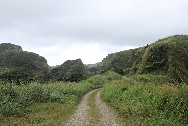 1013往半平山的無耳茶壺登山步道 (63)