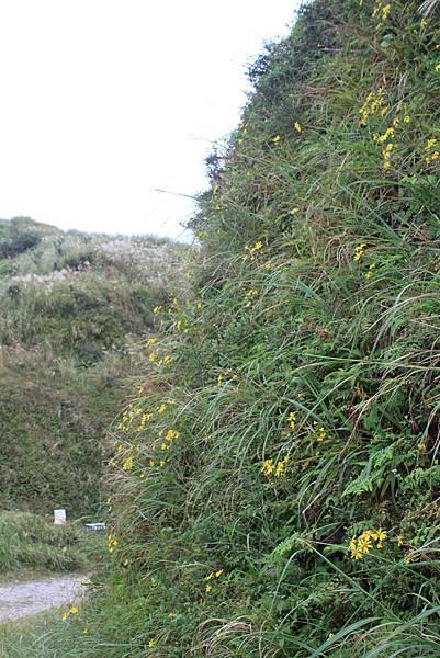 1013往半平山的無耳茶壺登山步道 (64)