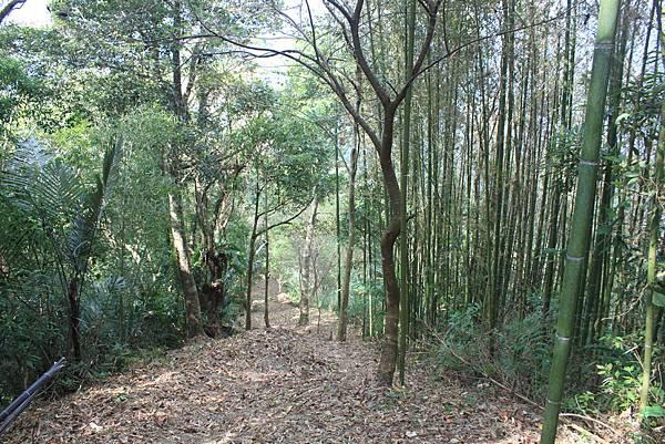 1104五峰鄉鬼澤山登山(59)