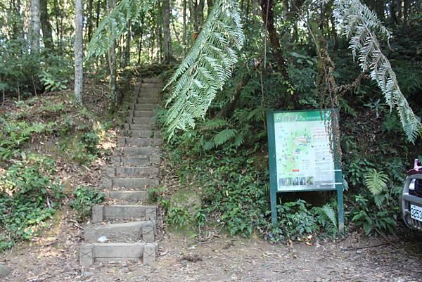 1110尖石水田山及北得拉曼神木 (4)