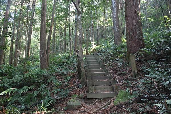 1110尖石水田山及北得拉曼神木 (11)