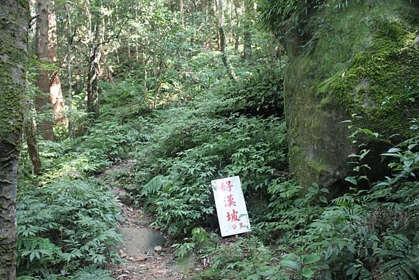 1110尖石水田山及北得拉曼神木 (12)