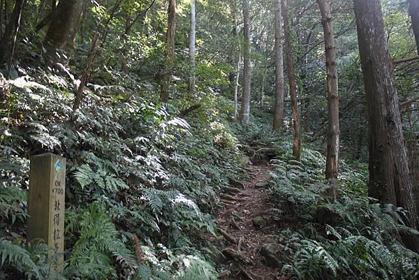 1110尖石水田山及北得拉曼神木 (13)