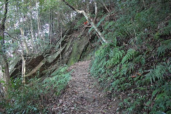 1110尖石水田山及北得拉曼神木 (14)