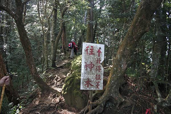 1110尖石水田山及北得拉曼神木 (16)