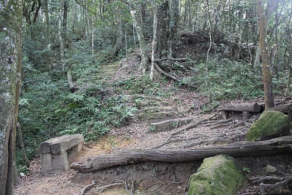 1110尖石水田山及北得拉曼神木 (17)