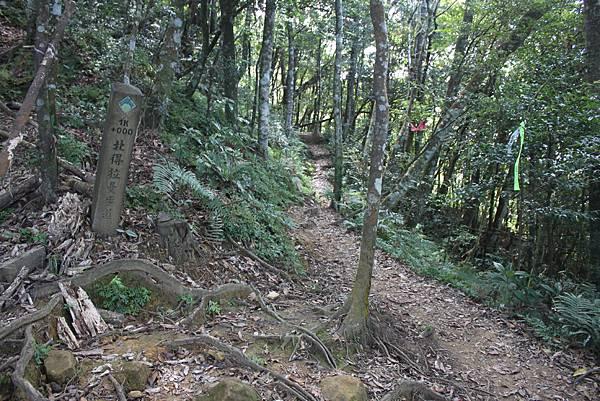 1110尖石水田山及北得拉曼神木 (18)