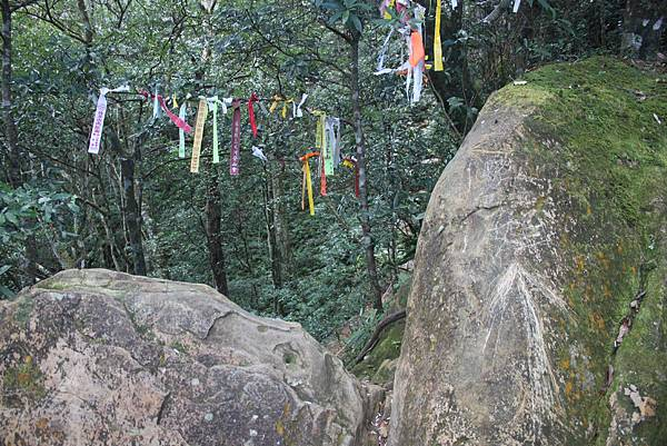 1110尖石水田山及北得拉曼神木 (20)