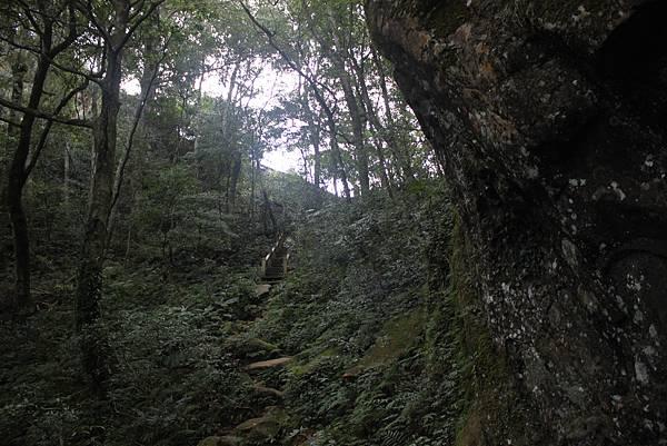 1110尖石水田山及北得拉曼神木 (21)