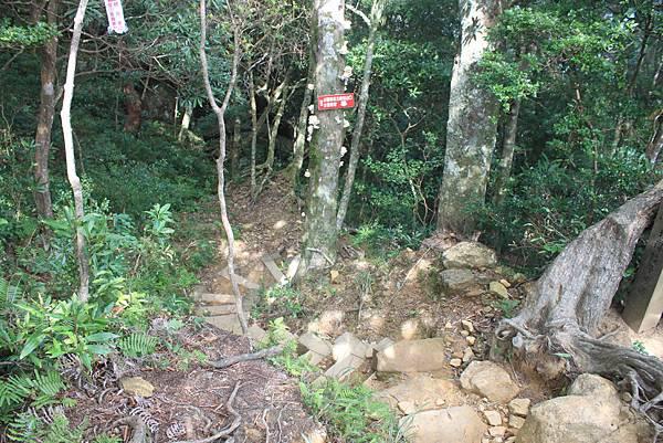 1110尖石水田山及北得拉曼神木 (27)