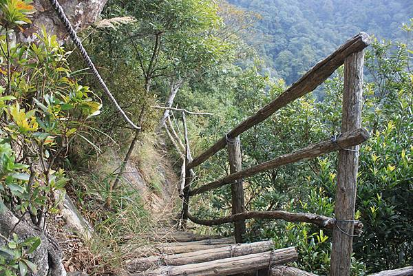 1110尖石水田山及北得拉曼神木 (30)