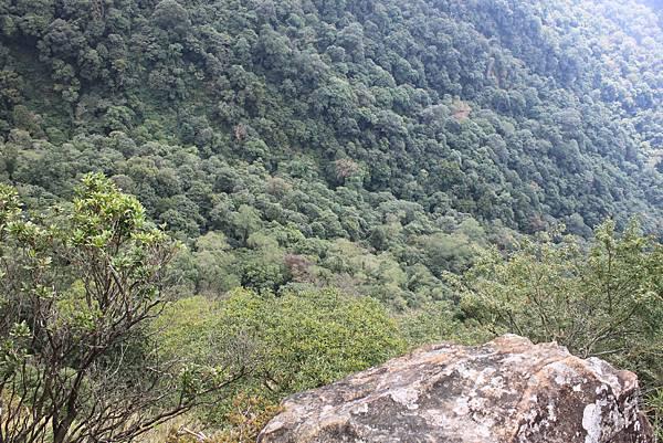 1110尖石水田山及北得拉曼神木 (33)