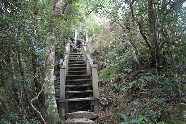 1110尖石水田山及北得拉曼神木 (40)