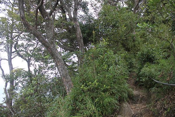 1110尖石水田山及北得拉曼神木 (41)