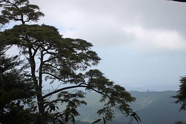 1110尖石水田山及北得拉曼神木 (42)