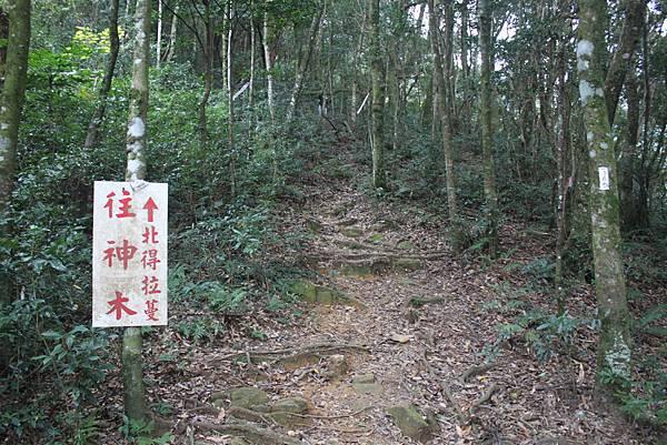 1110尖石水田山及北得拉曼神木 (51)