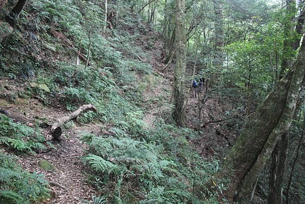 1110尖石水田山及北得拉曼神木 (53)