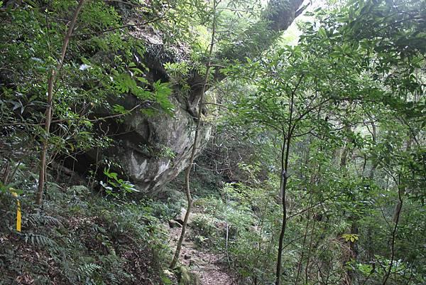 1110尖石水田山及北得拉曼神木 (57)