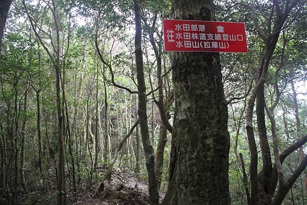 1110尖石水田山及北得拉曼神木 (80)