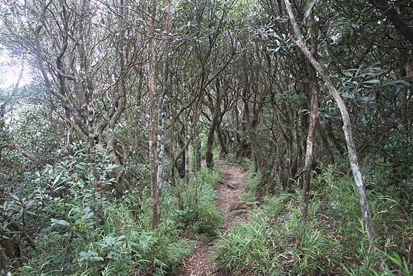 1110尖石水田山及北得拉曼神木 (86)