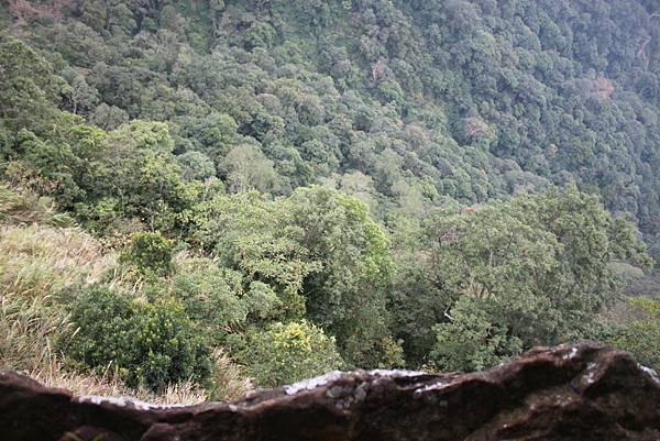 1110尖石水田山及北得拉曼神木 (90)
