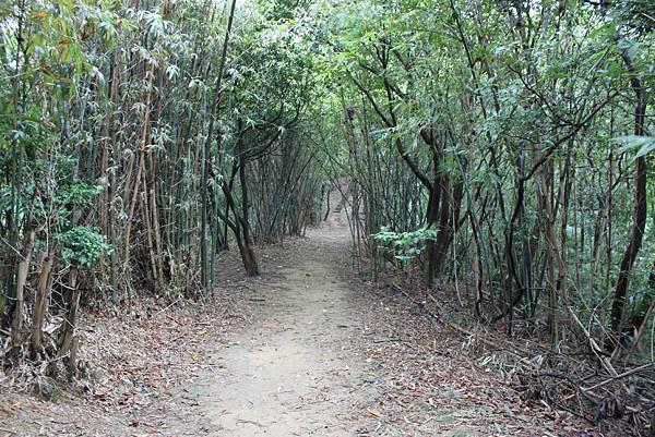 1124龜山福源山步道 (11)