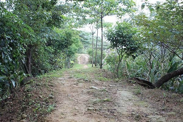1124龜山福源山步道 (13)