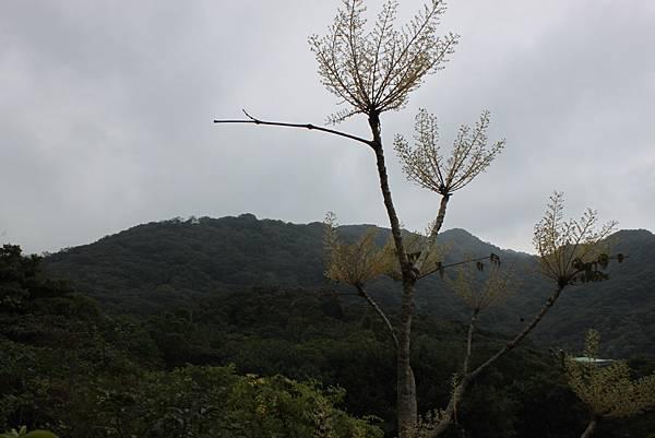 1124龜山福源山步道 (19)