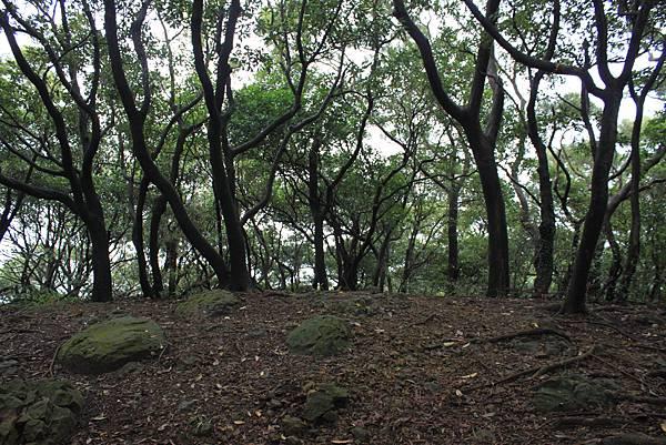 1124龜山福源山步道 (35)