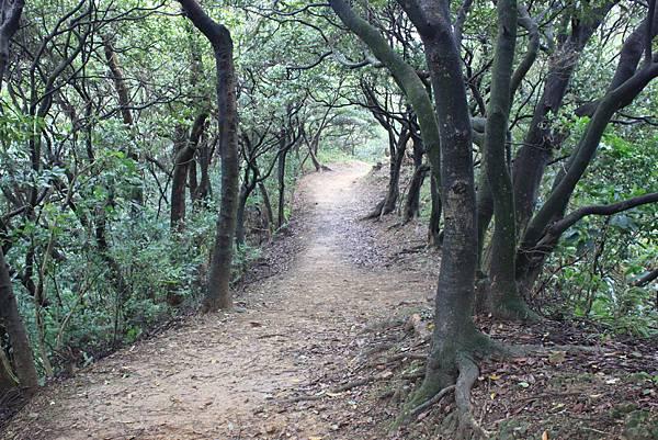 1124龜山福源山步道 (38)