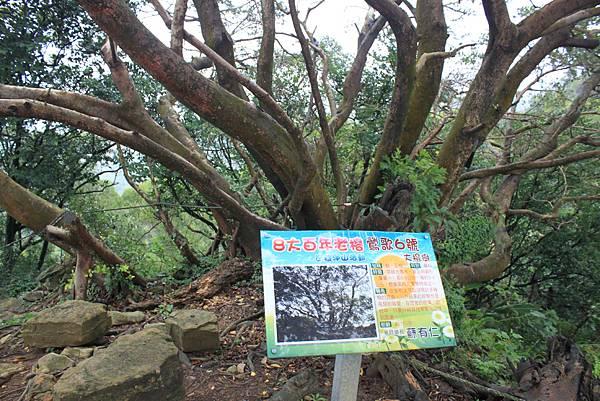 1124龜山福源山步道 (40)